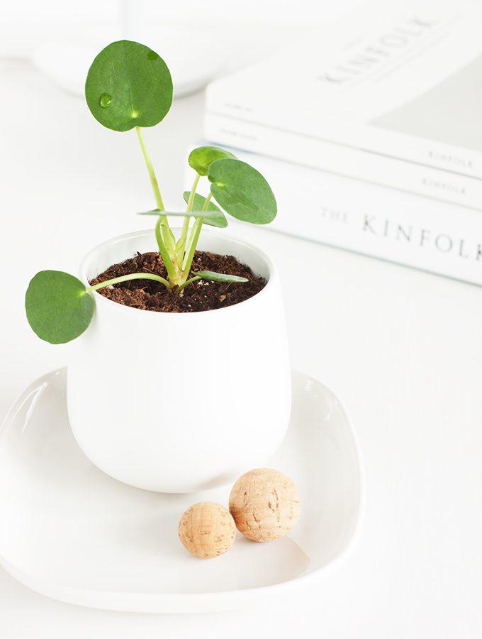Das It-Pflanzen-Girl
