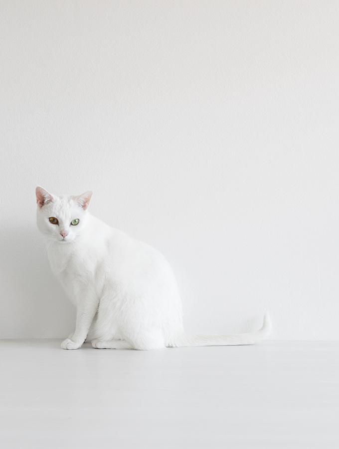 Weiße Katze vor weißem Hintergrund